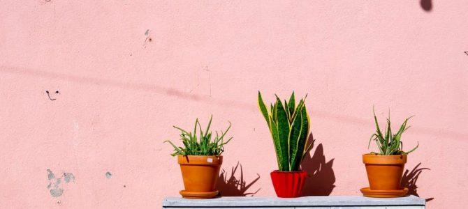 Lees hier hoe je de kleur roze toe kunt passen in jouw woonkamer